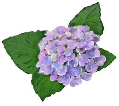 紫色繡球花盛開