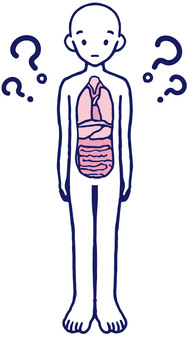 Mystery of the human body Human body model Human body