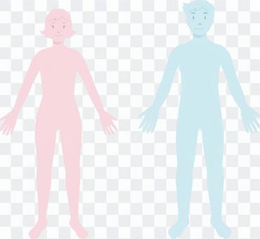 人體類型_女性和男性