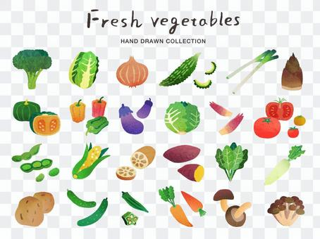 Hand-painted vegetable illustration set