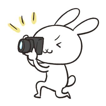 Rabbit taking a camera