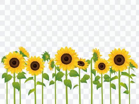 Summer flower · Sunflower (sunflower) multiple 02