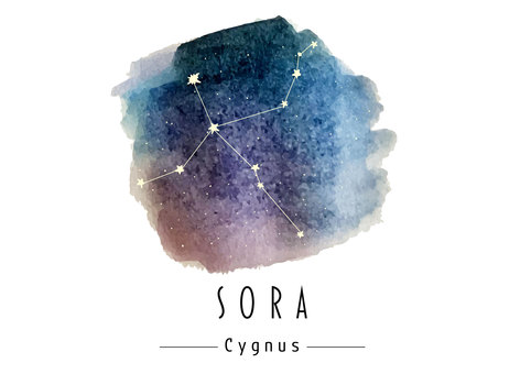 Cygnus watercolor illustration