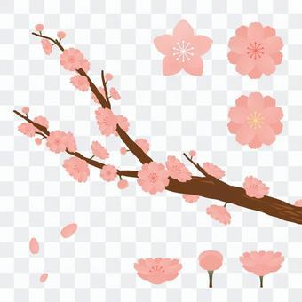 Various peach blossoms