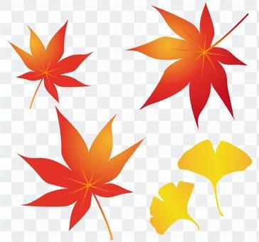 秋天的材料_秋葉_銀杏
