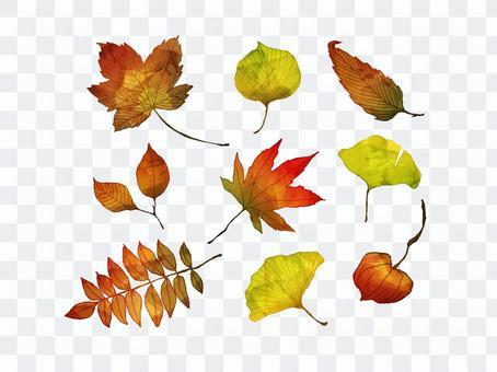 [손] 수채화 같은 낙엽 1