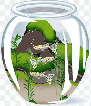 水族館王眼鏡蛇瓶