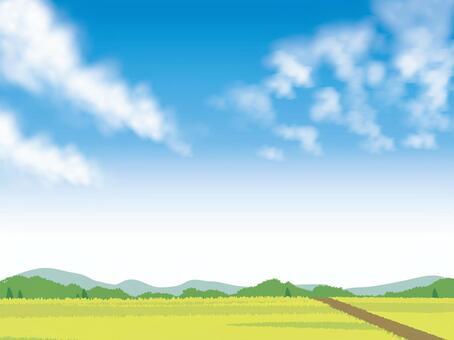 藍藍的天空和稻田