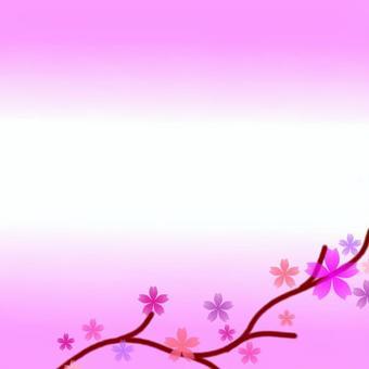 可愛的櫻桃背景
