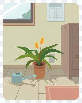 Houseplants and watering cans in the room