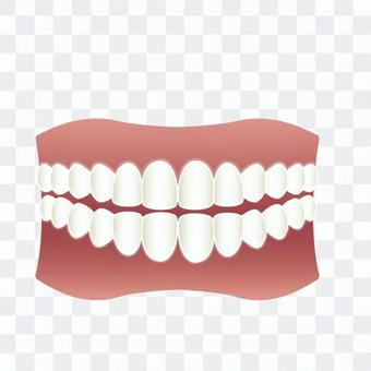 Tooth alignment
