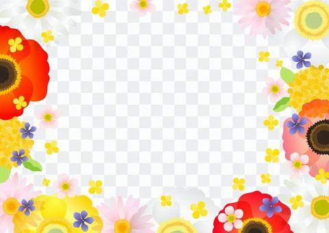 春季花框臥式透明螞蟻