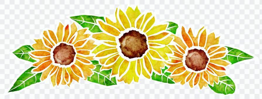 向日葵水彩畫 -  3朵花