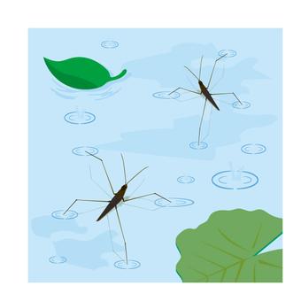 Water striders inhabit
