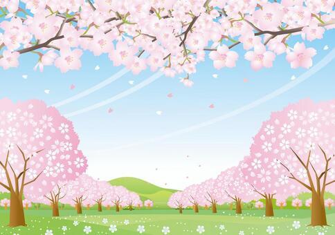 櫻花山風景