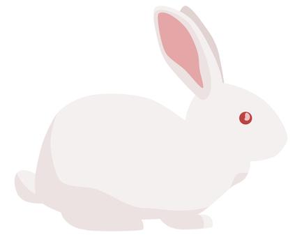 Rabbit white rabbit