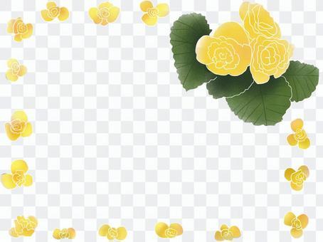 秋海棠黃色