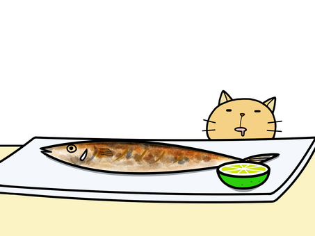 pacific saury and cat