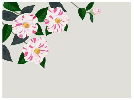 白色山茶花冬花
