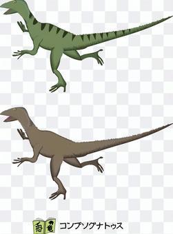 Compsognathus恐龍老式的小食肉動物
