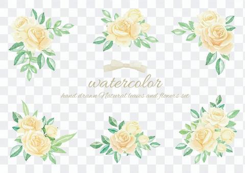水彩白玫瑰