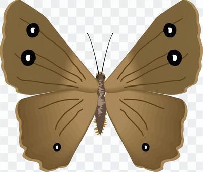 ジャノメチョウ タテハチョウ科 昆虫