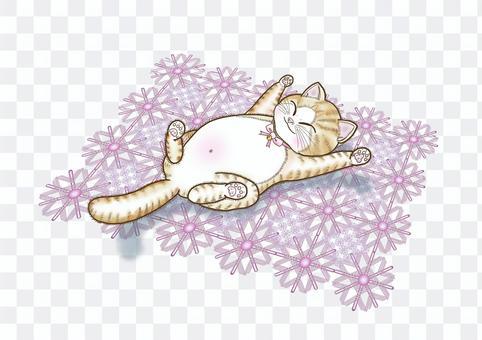 カーペットでくつろぐ猫