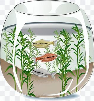 水族館珍珠魚