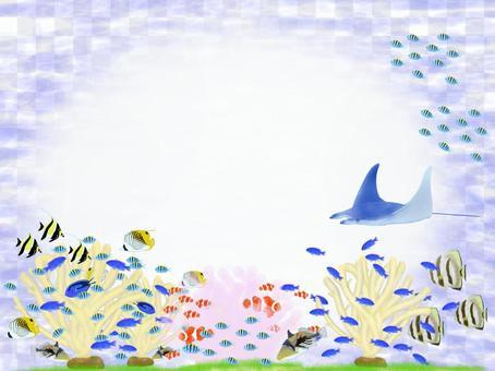 沖縄の海の魚 ② メッセージカード