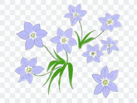 紫色の花 ハナニラ
