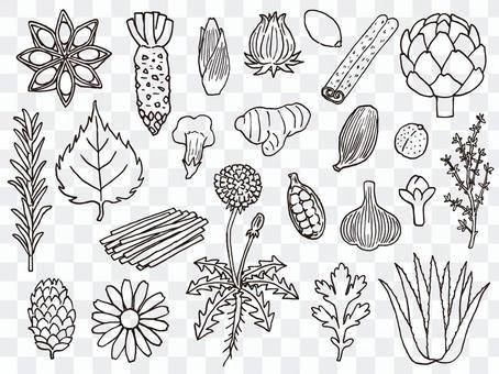 草藥圖(手寫風格)