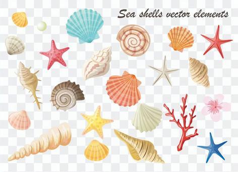 貝殼插圖材料總結