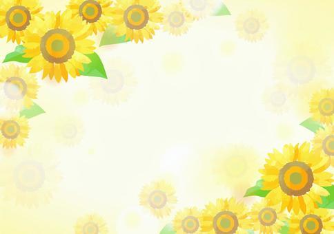 柔和的顏色向日葵背景1
