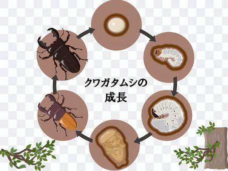 鹿角甲蟲成長與分支機構的信件
