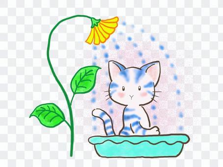 水浴びネコ1