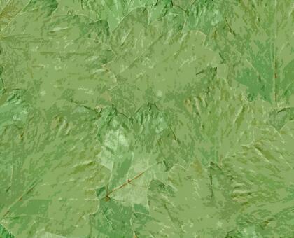 画面いっぱいの緑の柏の葉っぱの背景