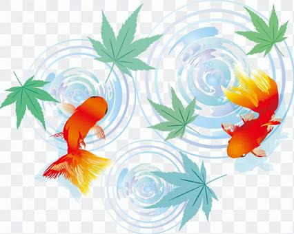 Goldfish Illustration Blue Autumn Leaves Spring Early Summer June July August Water Surface