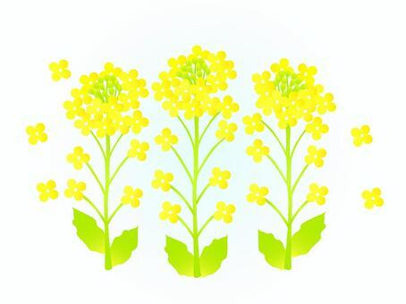 유채 꽃 3 개