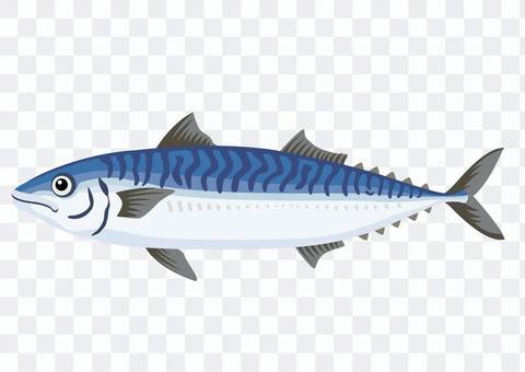 Mackerel / mackerel