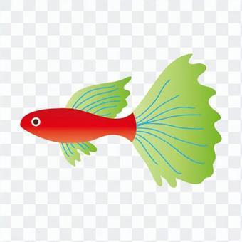 熱帶魚(青)