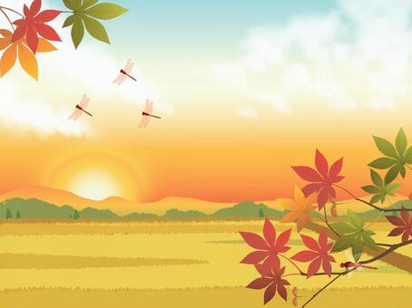 夕陽的天空和水稻與楓樹