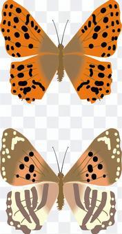 ミドリヒョウモン タテハチョウ科 昆虫