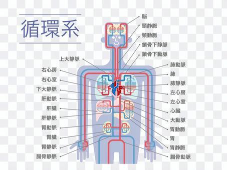 上身循環系統圖(日語,白色背景)