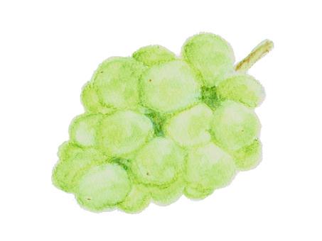 用水彩筆劃的白葡萄