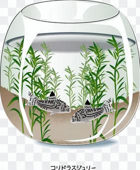 水族館Corydoras朱莉魚
