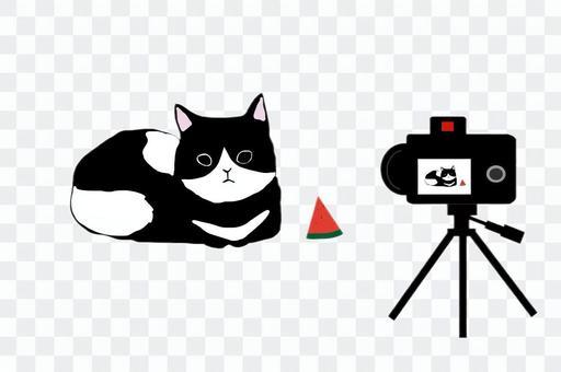要錄製的貓