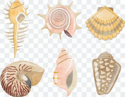 貝類設置水彩風格