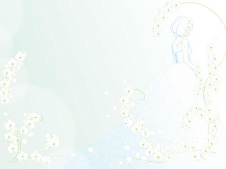 新娘【蝴蝶兰】