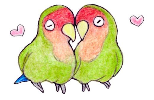 一對用彩色鉛筆劃的紅臉愛情鳥