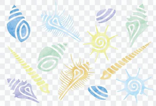 夏天顏色/貝殼品種